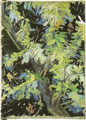 Branches d'acacia en fleurs (1890)